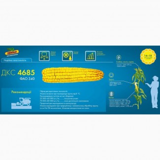 Купить семена кукурузы ДКС 4685 Монсанто (фао 340) импорт