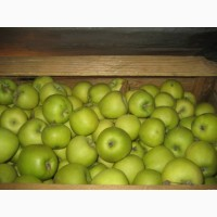Продам яблоки семеринка