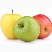 Куплю Яблоки урожай 2019