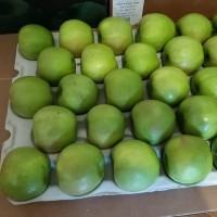 Яблоки закупаем оптом