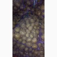 Продам семенной картофель(элита)
