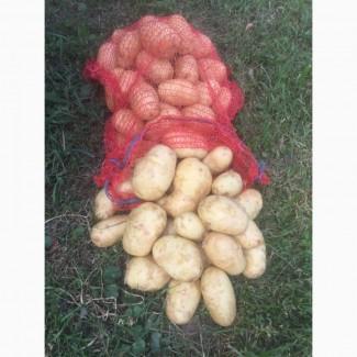 Продам молодой картофель, Киевская обл
