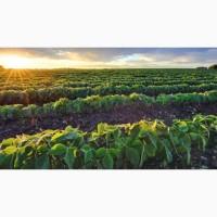 Закупаем с/х продукцию-Соя урожай 2020 года