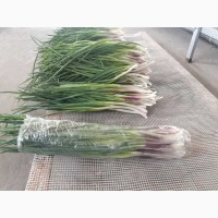 Продам зелень(лук перо).мяту.базилик