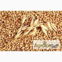 Продаются пестициды и агрохимия для зерновых оптом