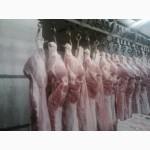 Реализуем полу-туши свинины Опт розница