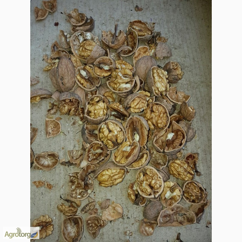 грецкие орех фото