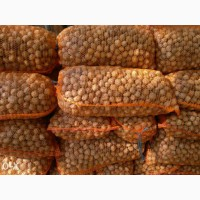 Продажа грецкого ореха бойный