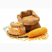Продам кукурузу оптом