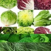 Предлагаем зелень, салаты, пряные травы, специи, овощи