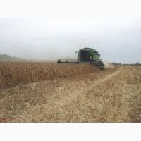 Насіння сої ПРУДЕНС (не ГМО) Канада