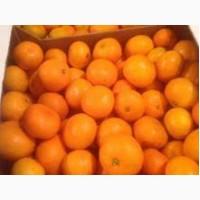 Продам мандарины грузинские турецкие в хорошем качестве сладкие калибр 5.6
