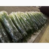 Продам зелёный лук в хорошем качестве размер лука 45-50 см