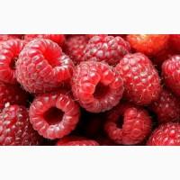 Закупаем ягоду Малину
