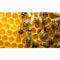Продам бджолопакети, порода укр.степова