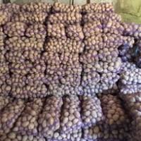Продам картошку любовь 6