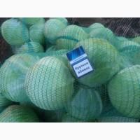 Продам капусту белокочанную сорт АГРЕССОР. Запорожская область, пгт Акимовка
