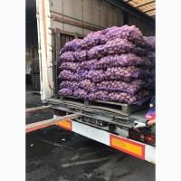 Продаем товарный картофель отличного качества, Украина