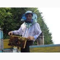 Продам свіжовикачаний мед різнотрав#039;я