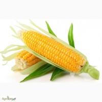 Продажа пестицидов для кукурузы