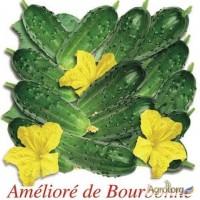 Продам семена Огурец Французский стандарт