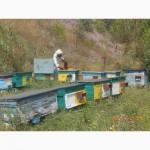 Продам пчелиную пыльцу
