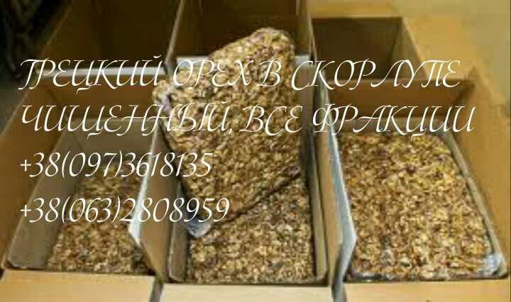 Фото 2. Готовы сотрудничать с посредниками, представителями крупных закупщиков грецкого ореха