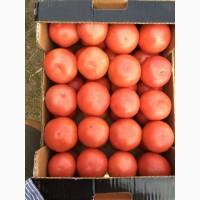 Продажа крупным оптом томатов