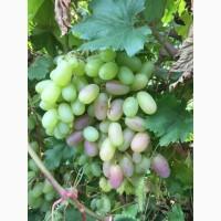 Продам виноград, сорт Преображение