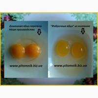 Свежие яйца перепелов, домашние