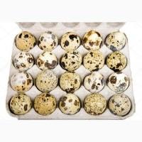 Продам перепелиные яйца оптом 90 коп за шт