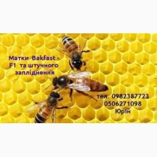 Продам бджоломатки з 1го травня