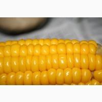 Закупаем кукурузу оптом