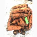 Морковь оптом Луцк. Доставка