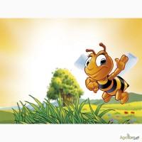 Покупаем мед, без содержания антибиотика. Дорого
