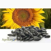 Жалон гибрид подсолнечника семена