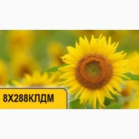 Продам подсолнечник 8Х288КЛДМ