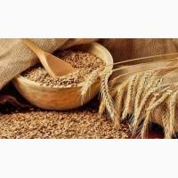 Куплю пшеницу разноклассовую. семя подсолнечника. Кукурузу. Ячмень. Днепр