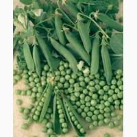 Продаём семена зелёного гороха сорта Зекон, Профит, 1-репродукция