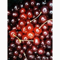 Куплю ягоду вишни