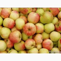 Купуємо яблука в необмеженій кількості