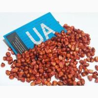 Предлагаем семена гибрида кукурузы ДБ ХОТИН