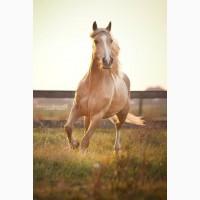 Закупаю лошадей в Харьковской обл