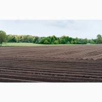 Продажа 380га сельхозпредприятие Расположение: Житомирская обл