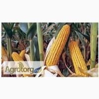 Продам насіння кукурудзи гібриди Monsanto ФАО 170 - 330