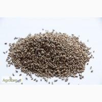 Семена петрушки мелким и крупным оптом от производителя