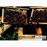 Пчелопакеты, бджолопакети +доставка
