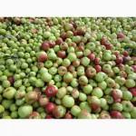 Закуповуєм Орех, яблука