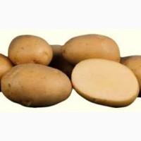 Продам картофель оптом, на закладку