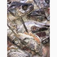 Продам рыбные отходы-белой рыбы (головы, хвосты)
